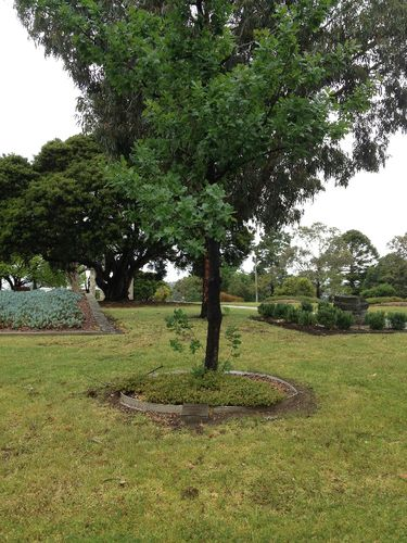 40th Anniversary Geelong Branch NCWV: November 2013