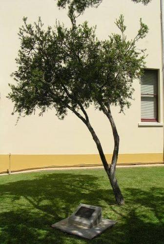 5th Air Force Memorial Tree : 23-April-2011
