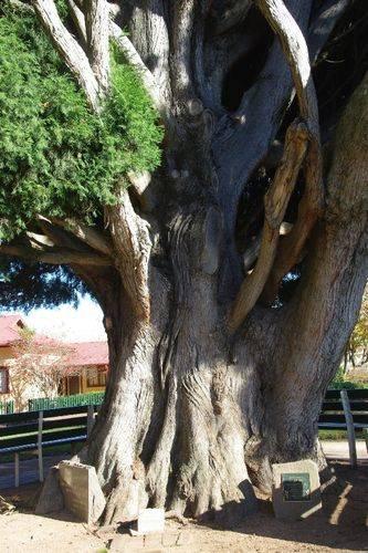 Ald Blacket Tree : August-2014