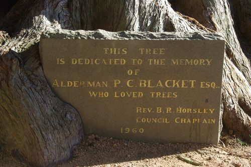 Blacket Tree Plaque : August-2014