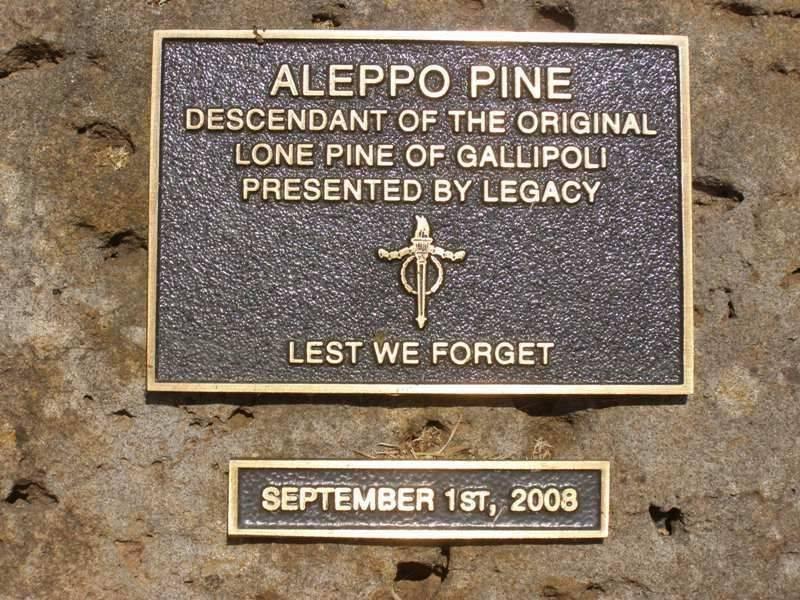 Aleppo Pine Plaque : 19 - October-2014