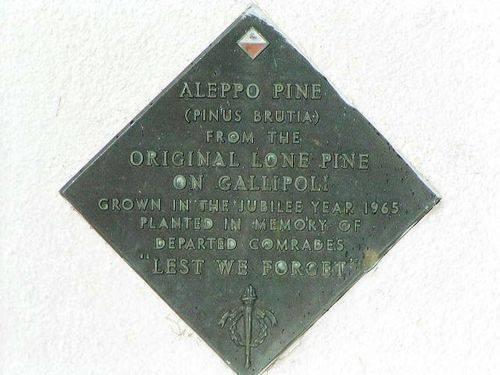 Aleppo Pine Inscription
