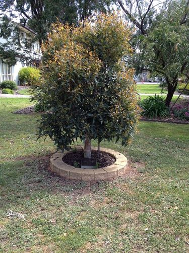 Alice Morton Tree : October 2013