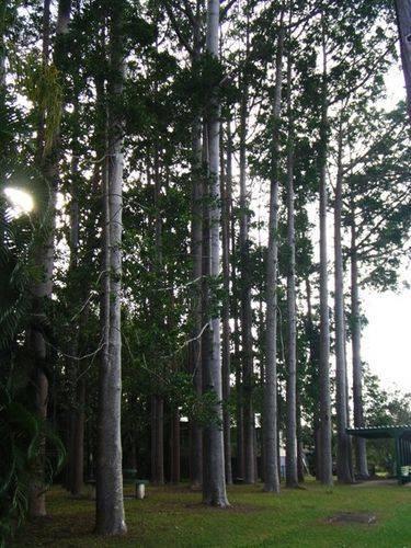 Arbor Day Trees