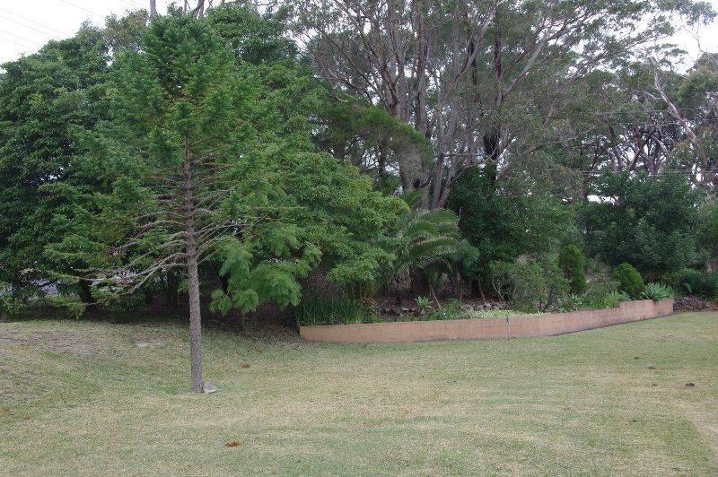 Tree 2 : 15-June-2015