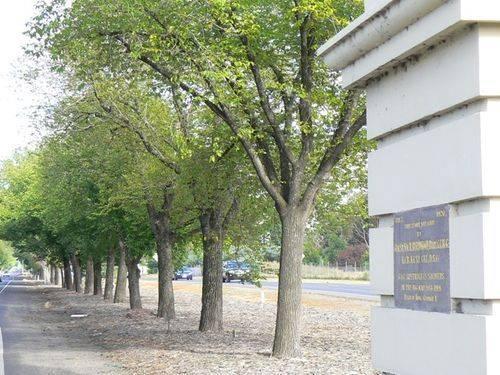 Avenue of Honour : 02-January-2013