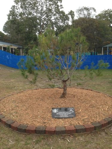 Beachmere State School Lone Pine : August -2014