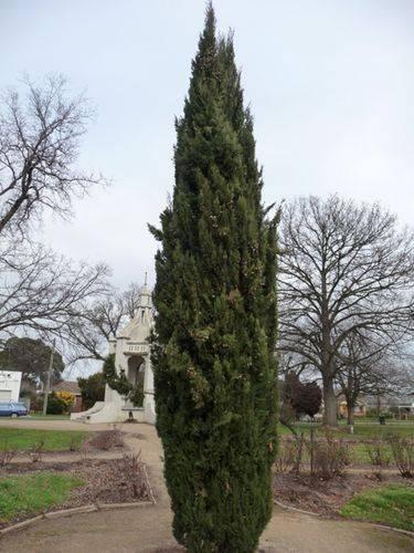 Beaufort Lone Pine Memorial