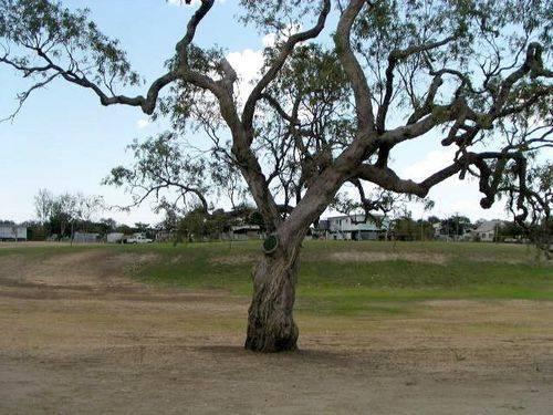 Exploreres Tree
