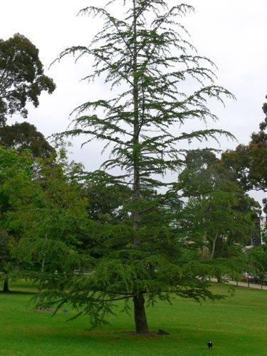 Friendship Tree : 16-November-2011