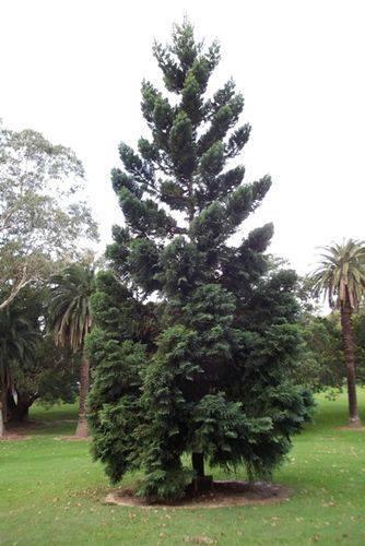 Judge Milton Boulter Tree : Feb 2014