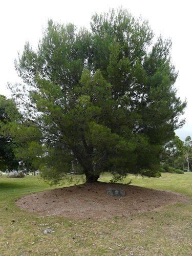 Lone Pine Memorial : 19-February-2012