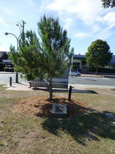 Gallipoli Pine : 28-05-2014