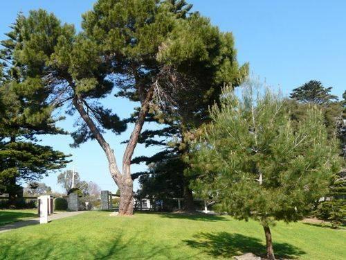 Lone Pine : 28-September-2011