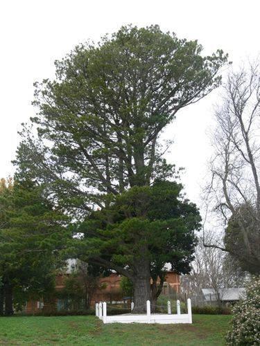 Lone Pine Memorial : 14-July-2012