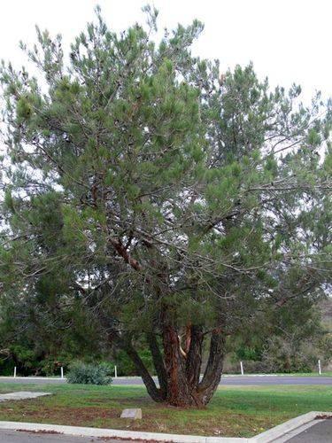 Lone Pine Memorial  : 10-May-2012
