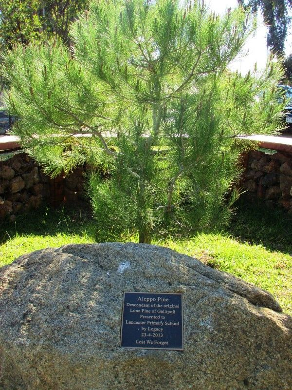 Lone Pine 2 : 07-August-2015
