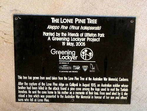 Lone Pine Tree Plaque
