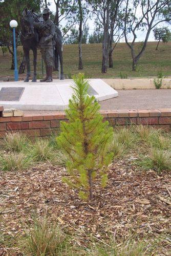 Lone Pine Tree Waler Memorial (David Evans OAM)