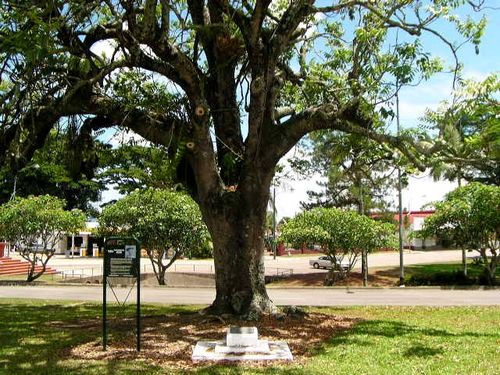 Mafeking Tree
