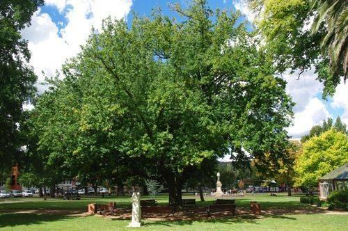 Lady Belmore Oak : June 2014