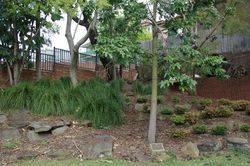 Tree + plaque : 23-September-2015