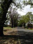 Avenue of Honour 2 : October 2013