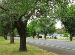 Avenue of Honour 2 : 06-December-2014