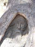 Burke & Wills Dig Tree : 12-August-2009