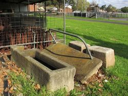 Showgrounds Trough : 10-May-2015
