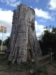 Darnum Big Stump : 29-12-2013