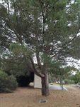 Gallipoli Lone Pine : April 2014