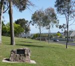 Lions Avenue of Trees : 02-December-2012