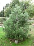 Lone Pine : 11-May-2013