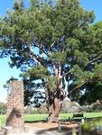 Lone Pine Memorial : 19-May-2012