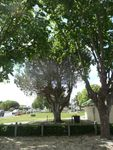 Lone Pine Memorial : 01-December-2012