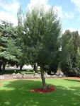 Lone Pine Memorial : 02-December-2012