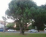 Lone Pine Memorial : 05-June-2013
