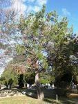Lone Pine Memorial : 17-June-2013