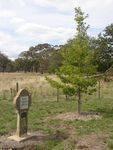 Queen Alexandra Tree : 15-04-2014