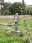 King Edward Tree : 15-04-2014