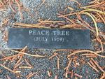 Peace Tree : 12-May-2012