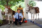 Senior Constable Nigel Allsopp with mules at Smoky dedication