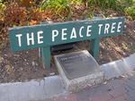 The Peace Tree 2 : 02-August-2014
