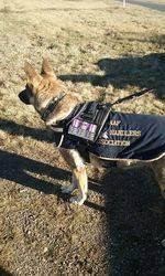 26-August-2016: RAAF Military Working Dog 2