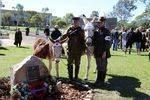 War Animals Plaque 2 : 04-05-2014