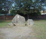 Wollondilla Garden : 25-January-2011